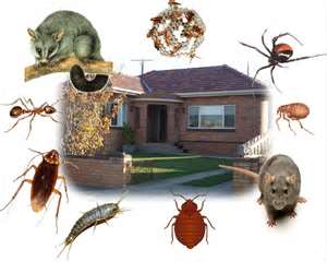 termite control huntington beach